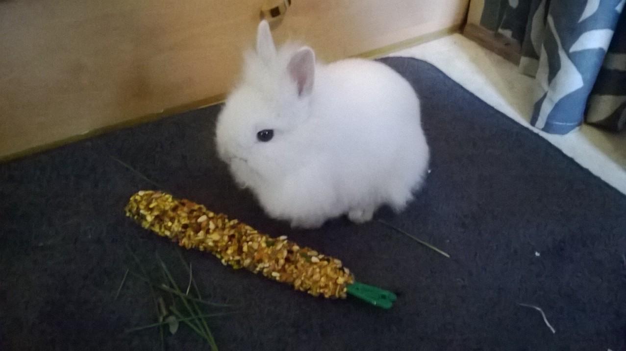 Wit konijn kwijt arnhem vermistedieren - Een hok ...